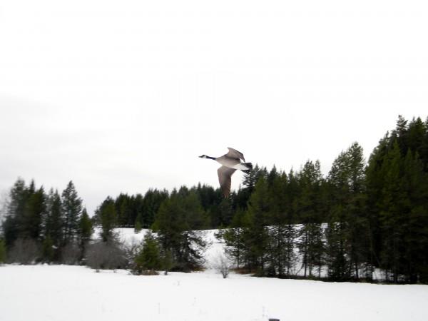 Buzzing me before landing.
