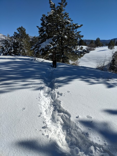 deep snow with snowshoe trail leading to tree and blue sky