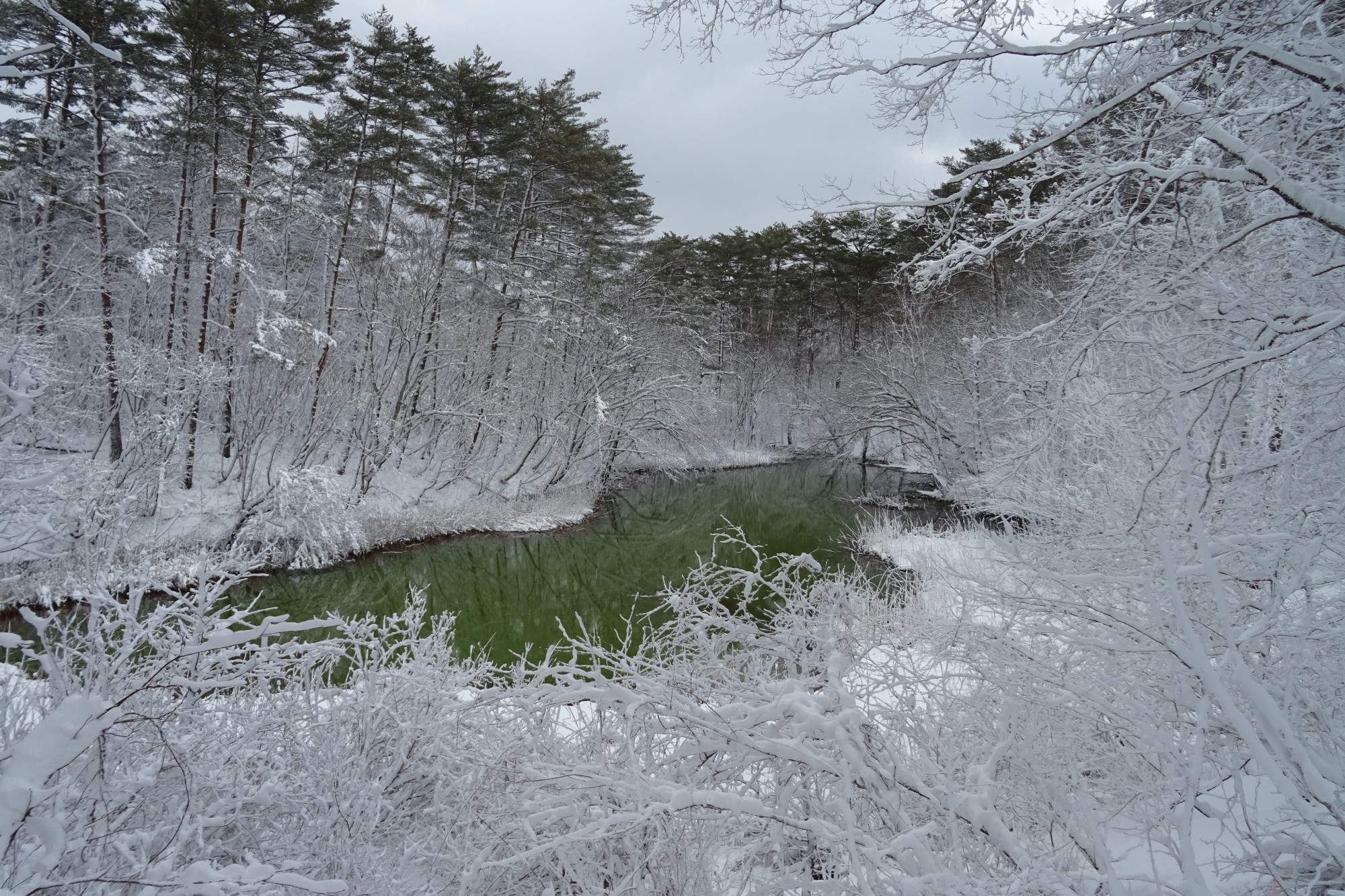 Five Colored Ponds Trail: Akanuma Pond (green pond with snow-covered branches surrounding it