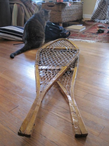 cat in front of traditional wooden snowshoes