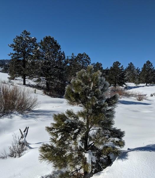 Chama NM landscape