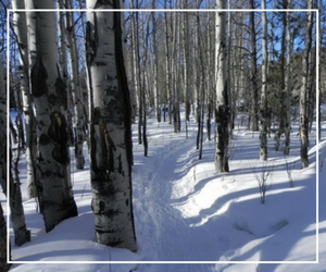 trails at Grand Lake Nordic Center, Grand Lake, CO