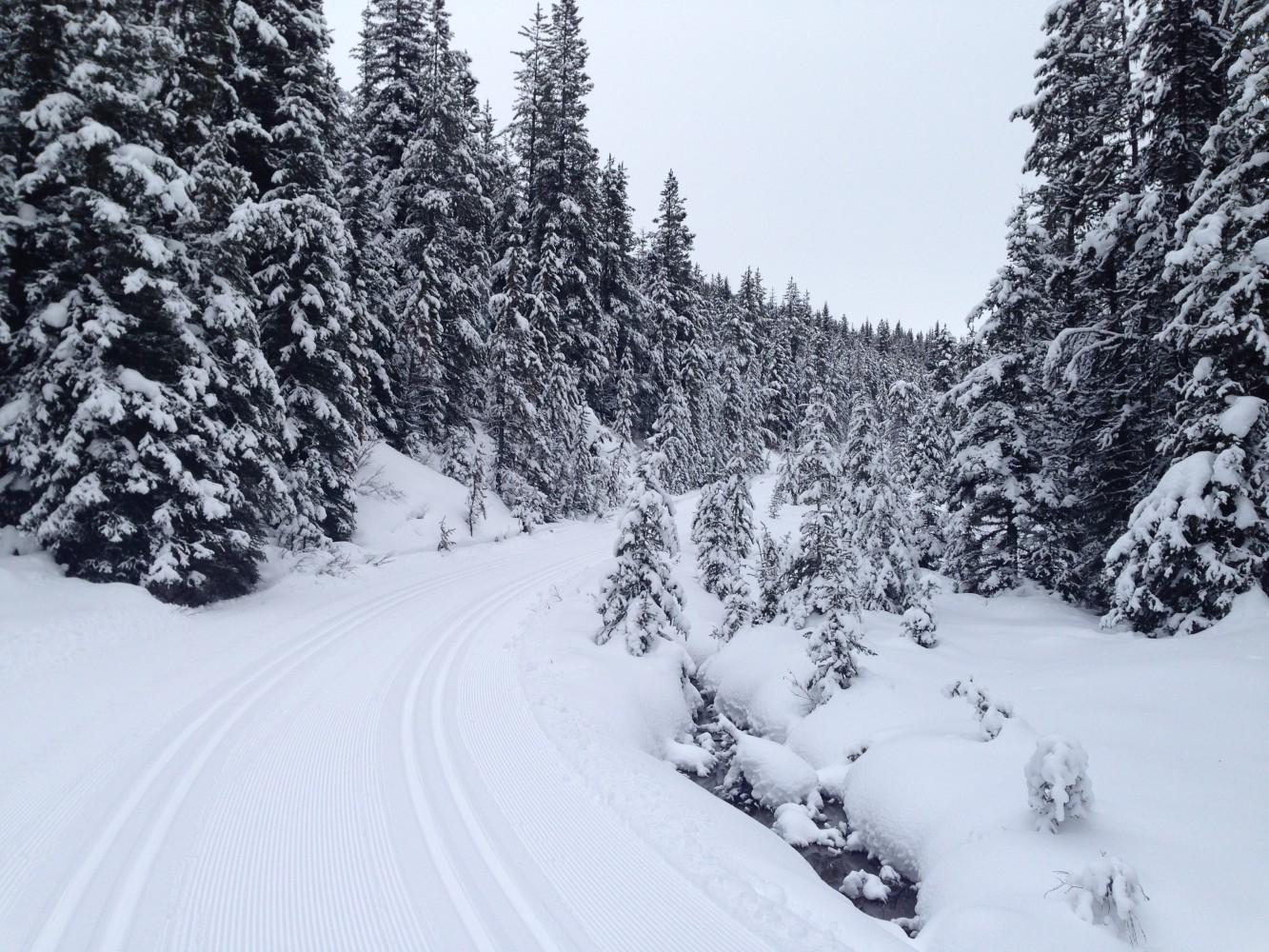 groomed ski trail, choosing a trail