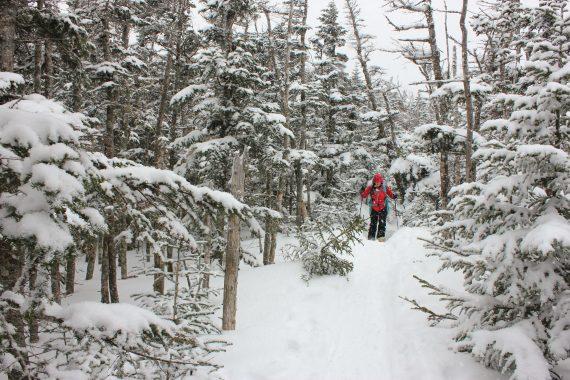 Nearing Mount Tecumseh's Summit, New Hampshire