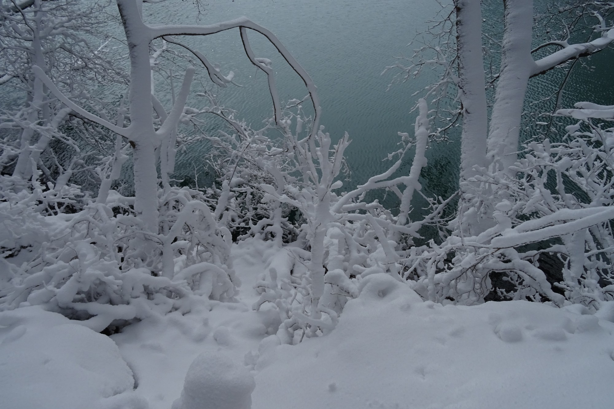 Urabandi winter activities: beautiful snow covered branches on the Five Colored Ponds Trail, Japan