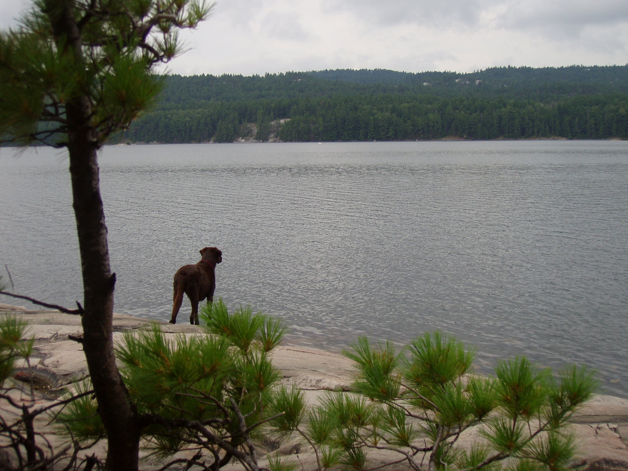 dog looking out onto the water