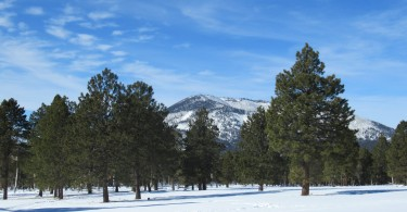 Flagstaff, Arizona- mountains, trees, blue sky