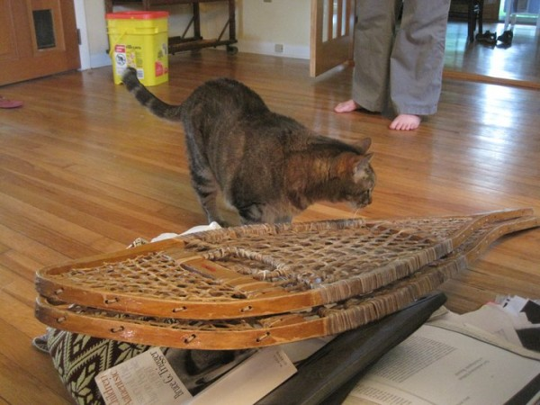 cat on traditional snowshoes