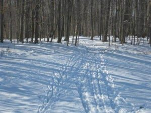 Trails in Knox Farm State Park, NY