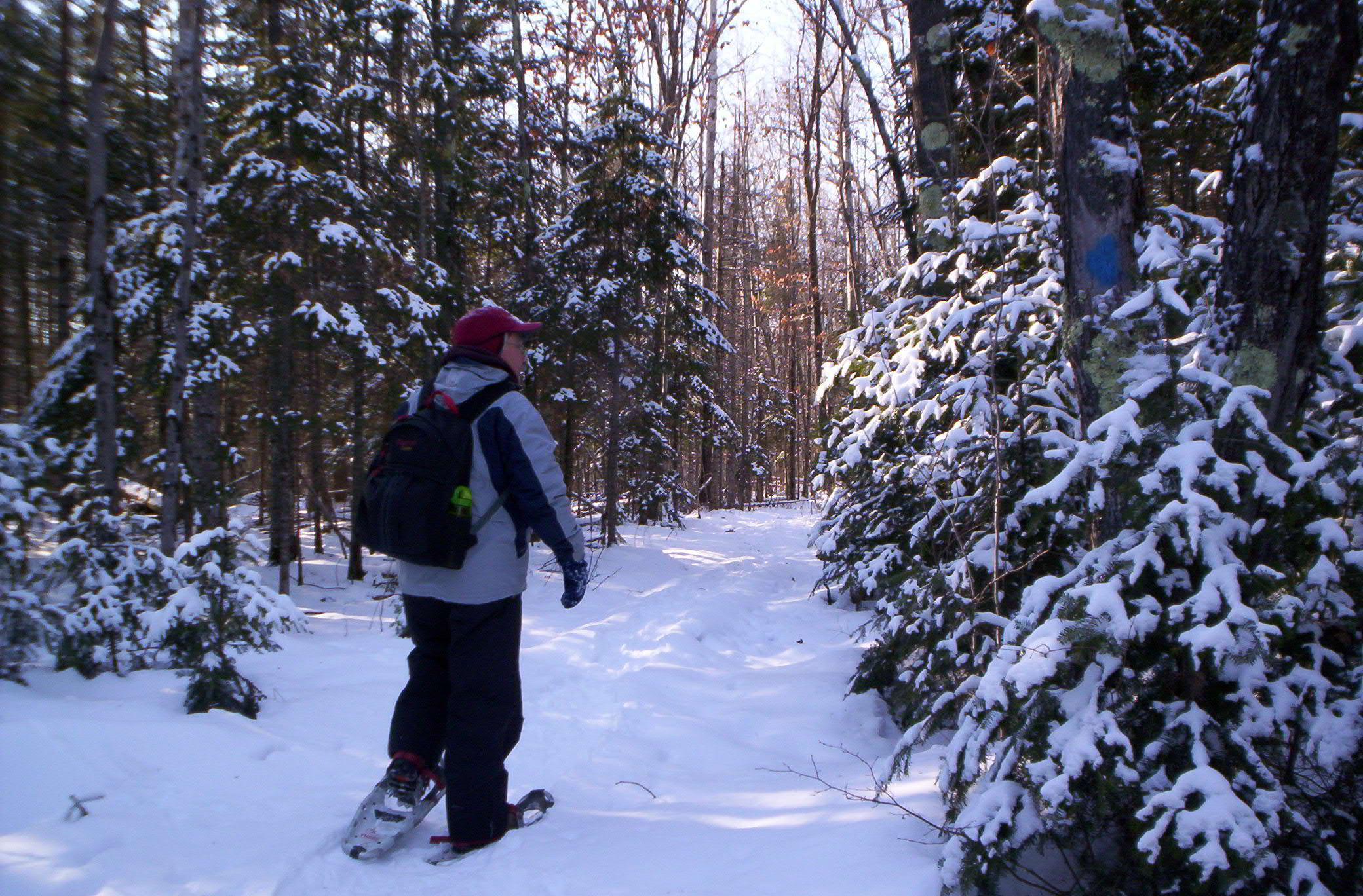 man snowshoeing along in forest