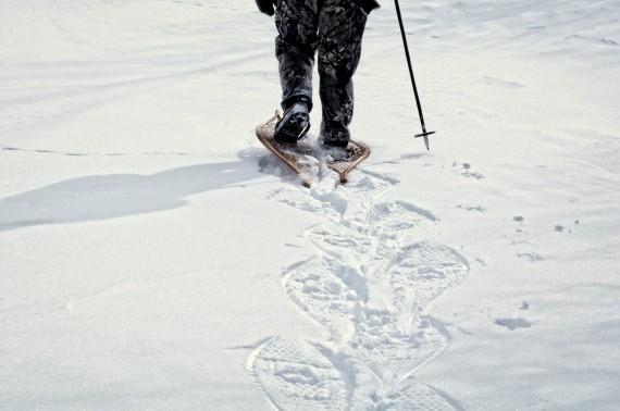 snowshoer wearing traditional snowshoes walking away and leaving snowshoe tracks