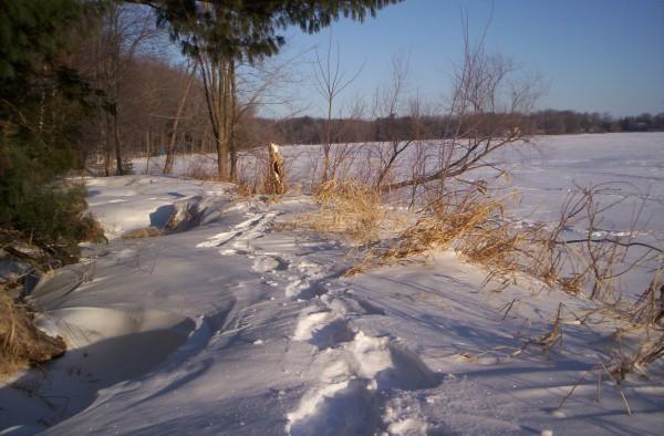 Snowshoe tracks along the Big Eau Pleine Flowage in Wisconsin.