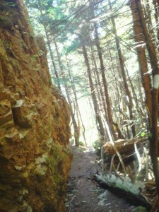 Narrow part of the Fundy Foot Path.