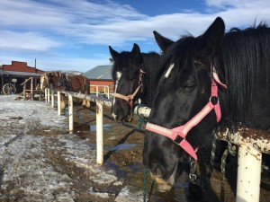 Sombrero Stables at Snow Mountain Ranch offers trail rides, sleigh rides and dinner rides.