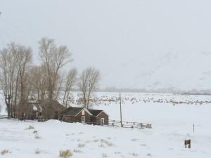 Jackson Hole National Elk Refuge.