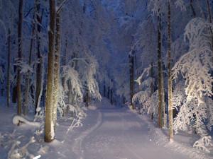 snowshoeing at night