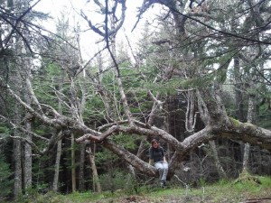 Cape Chignecto: ancient, gnarly tree. Great selfie, Kate!