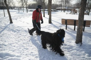 Popular Snowshoer and Dog Class Brings Out All Breeds