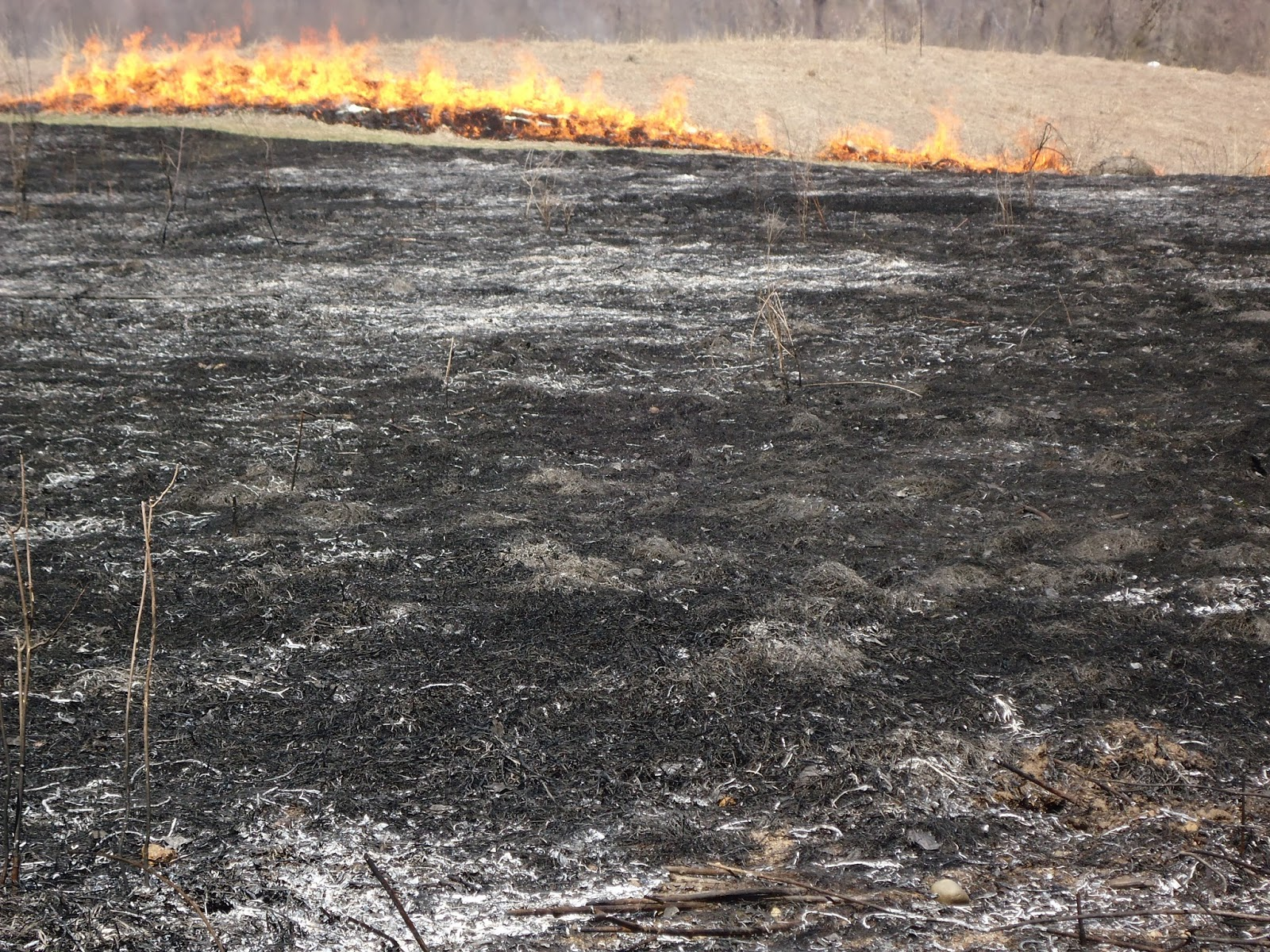 controlled burns This feature is not available right now please try again later.